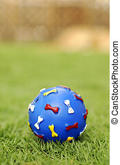 Pet Toy - A pet toy blue ball on grass at park. Focus on the...