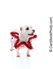Pet wearing a red tinsel star