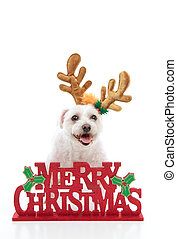 Pet with reindeer antlers and Merry Christmas message