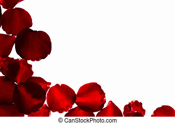 Petal of Red rose . - Petal of Red rose on white background.