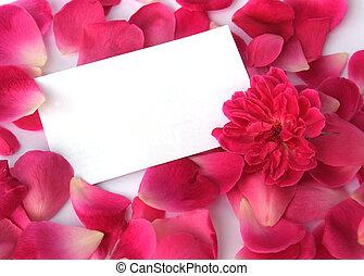 petali, bianco