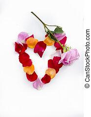 petali, cuoriforme, collezione, rosa