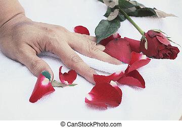 petali rose, mano