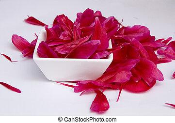 petali, rosso, peonia