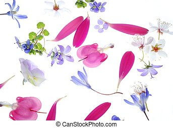 petals background - Close-up of colorful petals against...