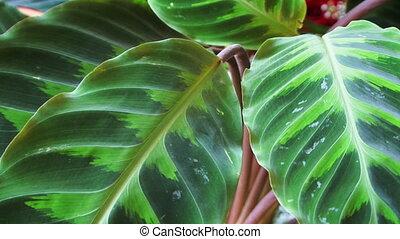 Petals green plant