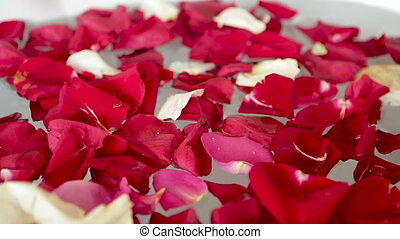 petals of red and white roses fall