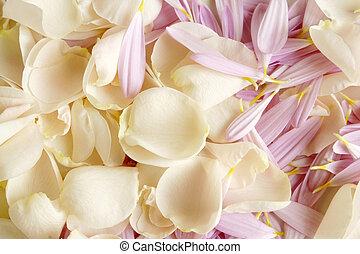 Petals of rose and gerbera