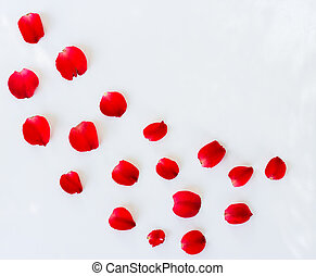 Petals of roses on white background