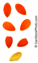 petals on white background