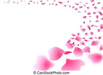 petals., sakura, gros plan, fleurs, isolé, design., voler, ...