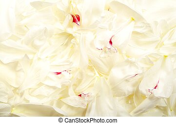 Petals white background