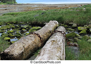 Petersburg Alaska Beach Scene