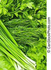 peterselie, ui, lettuce., venkel