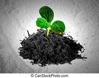 Petit arbre d coratif plante aimer arbre fond petit - Petit arbre decoratif ...