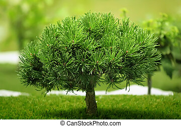 petit arbre d coratif plante aimer arbre fond petit images rechercher photographies. Black Bedroom Furniture Sets. Home Design Ideas