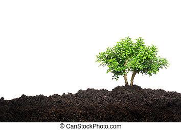 petit, blanc, arbre, isolé, fond
