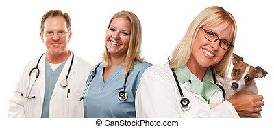petit, chiot, vétérinaire, femme, médecins