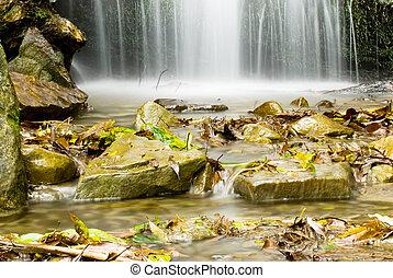 petit, chute eau, dans, les, forêt
