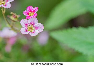 petit, cour, fleurs