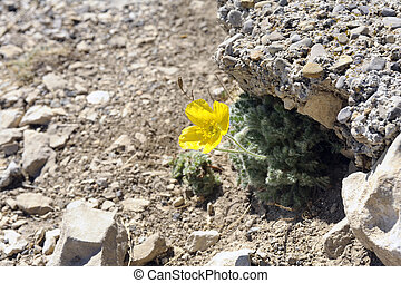 petit, fleur, isolé, jaune