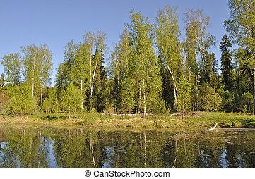 petit, forêt, lac