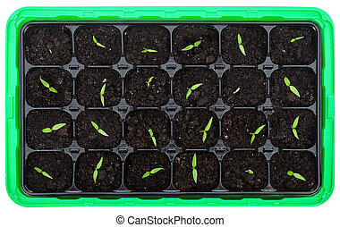 petit, germination, plateau, seedlings