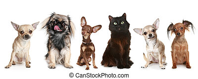 petit groupe, chiens, chat