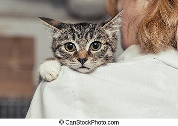 petit, médecin, mains, chaton