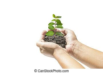 petit, plante, humain, tenue, mains