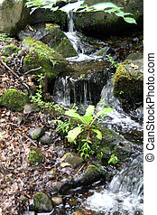 petit, sur, écoulement, ruisseau, rochers