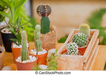petit, table, cactus, wood.