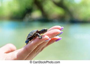 petit, tortue, mer