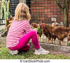 petite fille, alimentation, poules