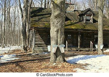 petite maison, vieux, érable, arbres