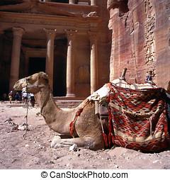 Petra in Jordan - Camel in front of Treasury Petra...