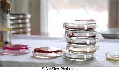 Petri dishes in medical laboratory - Technician sorting ...