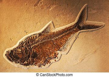 Petrified fish