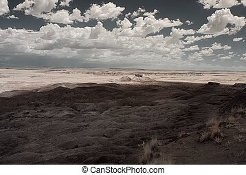 Petrified forest Arizona alien desert landscape national forest