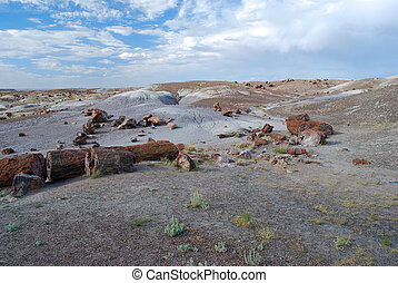 Several colorful petrified tree on the ground