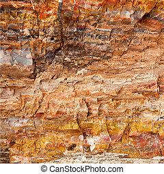 Closeup of petrified wood found in the Utah and Arizona regions of America