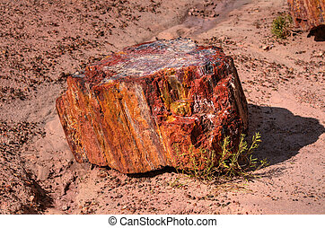 Petrified wood in the Petrified Forest Arizona
