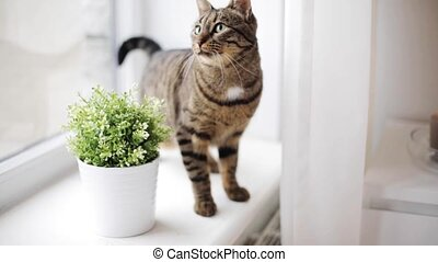 cat on window sill at home - pets and animals concept - cat ...