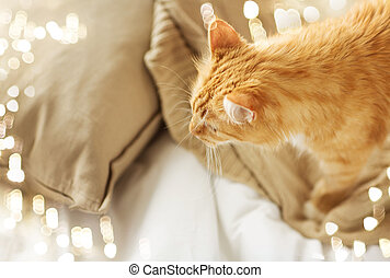 red tabby cat at home in bed
