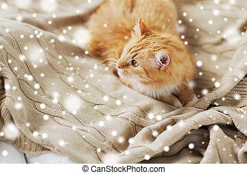 red tabby cat lying on blanket at home in winter