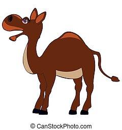 Pets animal camel