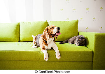 pets are enjoing their life - the cat and the dog are lying ...