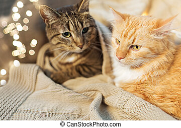 two cats lying with blanket at home
