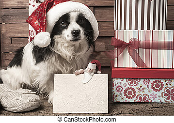 Pets  Christmas greeting postcard