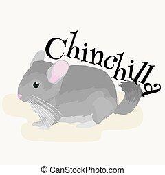 Pets, Gray chinchilla, domestic animals vector illustration...
